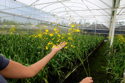 Green Point Nursery Novato Ca Best Idea Garden 1671 Newsletter